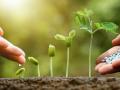 Выбор способа выращивания: три основных метода садоводов